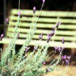 lavendar ridge farms
